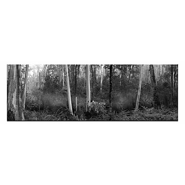 Artist Lane Tranquil Forest by Andrew Brown Photographic Print on Wrapped Canvas in Black