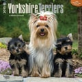 Browntrout Publishers 12in. x 12in. Yorkshire Terriers Wall Calendar