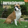 Browntrout Publishers 12in. x 12in. American Staffordshire Terriers Wall Calendar