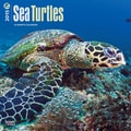 Browntrout Publishers 12in. x 12in. Sea Turtles Wall Calendar