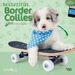 Browntrout Publishers 12in. x 12in. Myrna Beautiful Border Collies Wall Calendar