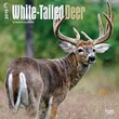 "Browntrout Publishers 12"" x 12"" WhiteTailed Deer Wall Calendar"