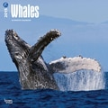 Browntrout Publishers 12in. x 12in. Whales Wall Calendar