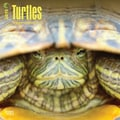 Browntrout Publishers 12in. x 12in. Turtles Wall Calendar