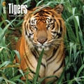 Browntrout Publishers 12in. x 12in. Tigers Wall Calendar