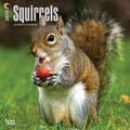 Browntrout Publishers 12in. x 12in. Squirrels Wall Calendar