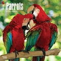 Browntrout Publishers 12in. x 12in. Parrots Wall Calendar