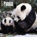 Browntrout Publishers 12in. x 12in. Pandas Wall Calendar