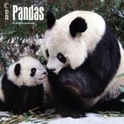 "Browntrout Publishers 12"" x 12"" Pandas Wall Calendar"