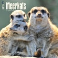 Browntrout Publishers 12in. x 12in. Meerkats Wall Calendar