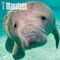 Browntrout Publishers 12in. x 12in. Manatees Wall Calendar