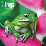 Browntrout Publishers 12 x 12 Frogs Wall Calendar
