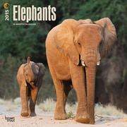 Browntrout Publishers 12 x 12 Elephants Wall Calendar