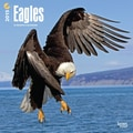 Browntrout Publishers 12in. x 12in. Eagles Wall Calendar