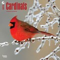 Browntrout Publishers 12in. x 12in. Cardinals Wall Calendar