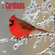"""Browntrout Publishers 12"""" x 12"""" Cardinals Wall Calendar"""