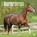 Browntrout Publishers 12in. x 12in. Quarter Horses Wall Calendar
