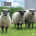 Browntrout Publishers 12in. x 12in. Sheep Wall Calendar
