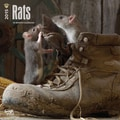 Browntrout Publishers 12in. x 12in. Rats Wall Calendar