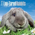 Browntrout Publishers 12in. x 12in. Lop-Eared Rabbits Wall Calendar