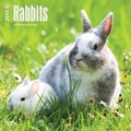 Browntrout Publishers 12in. x 12in. Rabbits Wall Calendar