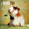 Browntrout Publishers 12in. x 12in. Guinea Pigs Wall Calendar