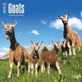 Browntrout Publishers 12in. x 12in. Goats Wall Calendar