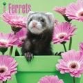 Browntrout Publishers 12in. x 12in. Ferrets Wall Calendar