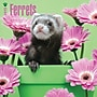 Browntrout Publishers 12 x 12 Ferrets Wall Calendar