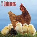 Browntrout Publishers 12in. x 12in. Chickens Wall Calendar