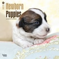 Browntrout Publishers 12in. x 12in. Newborn Puppies Wall Calendar