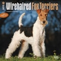 Browntrout Publishers 12in. x 12in. Wirehaired Fox Terriers Wall Calendar