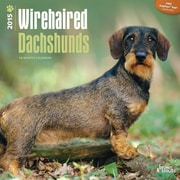 "Browntrout Publishers 12"" x 12"" Wirehaired Dachshunds Wall Calendar"