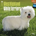 Browntrout Publishers 12in. x 12in. West Highland White Terriers Wall Calendar