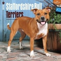 Browntrout Publishers 12in. x 12in. Staffordshire Bull Terriers Wall Calendar