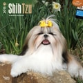 Browntrout Publishers 12in. x 12in. Shih Tzu Wall Calendar