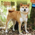 Browntrout Publishers 12in. x 12in. Shiba Inu Wall Calendar