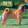 Browntrout Publishers 12in. x 12in. Shar-Pei Wall Calendar
