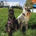 Browntrout Publishers 12in. x 12in. Schnauzers Wall Calendar