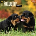 Browntrout Publishers 12in. x 12in. Rottweiler Puppies Wall Calendar