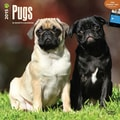 Browntrout Publishers 12in. x 12in. Pugs Wall Calendar