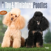"Browntrout Publishers 12"" x 12"" Toy and Miniature Poodles Wall Calendar"
