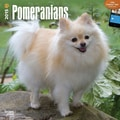 Browntrout Publishers 12in. x 12in. Pomeranians Wall Calendar