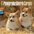 Browntrout Publishers 12in. x 12in. Pembroke Welsh Corgis Wall Calendar