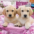 Browntrout Publishers 12in. x 12in. Yellow Labrador Retriever Puppies Wall Calendar