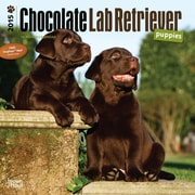 "Browntrout Publishers 12"" x 12"" Chocolate Labrador Retriever Puppies Wall Calendar"
