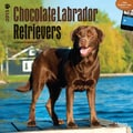 Browntrout Publishers 12in. x 12in. Chocolate Labrador Retrievers Wall Calendar