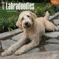 Browntrout Publishers 12in. x 12in. Labradoodles Wall Calendar