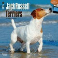 Browntrout Publishers 12in. x 12in. Jack Russell Terriers Wall Calendar