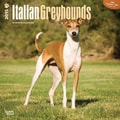 Browntrout Publishers 12in. x 12in. Italian Greyhounds Wall Calendar
